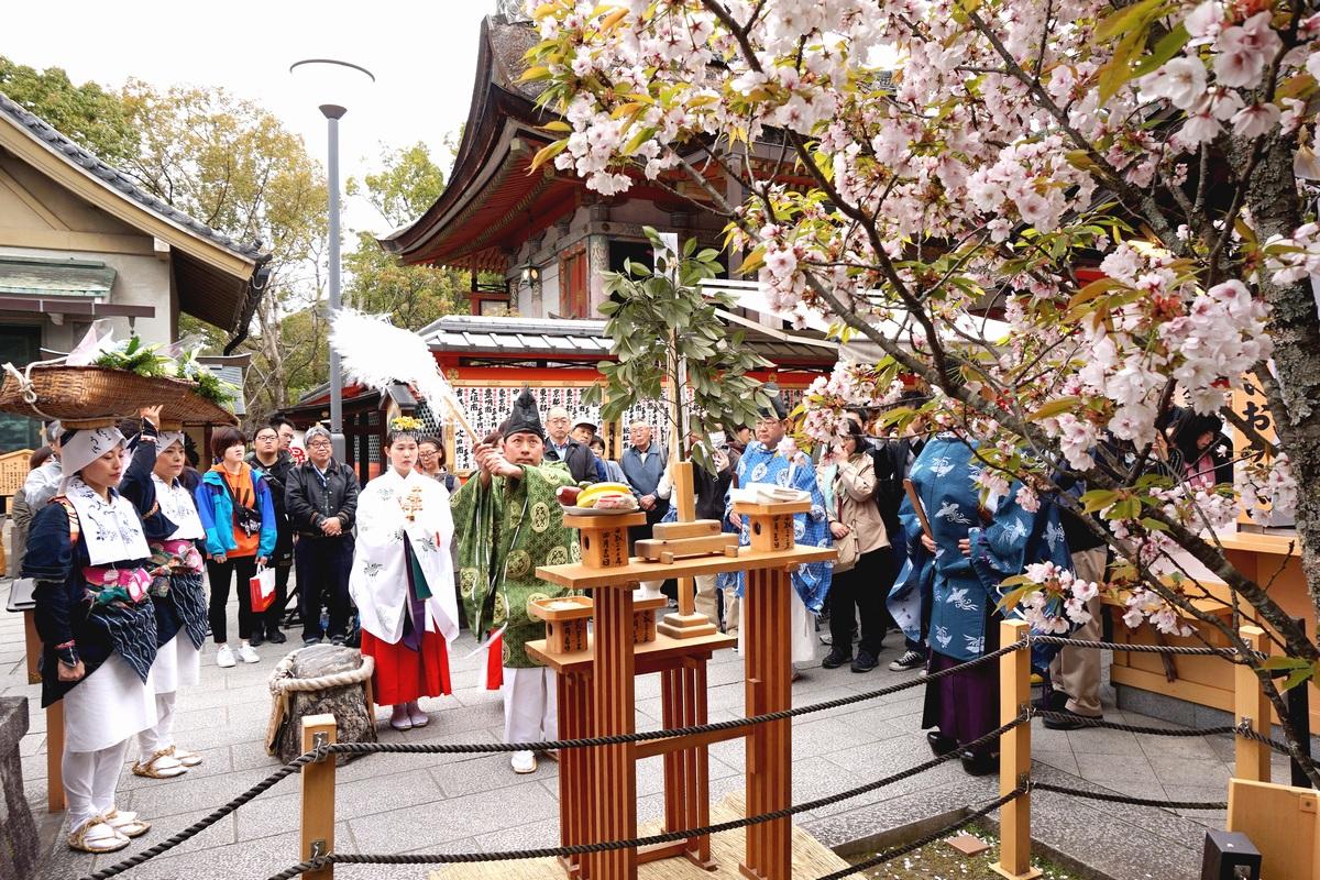 えんむすび祈願さくら祭り 地主桜 修祓