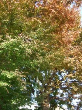 地主神社周辺の紅葉
